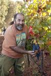 Phil Coturri, Vineyard Consultant